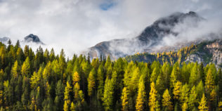 An autumnal mountain landscape, featuring larch trees with fall colours and rising fog with the Swiss Alps in the background. Golden Days - Copyright Johan Peijnenburg - NiO Photography