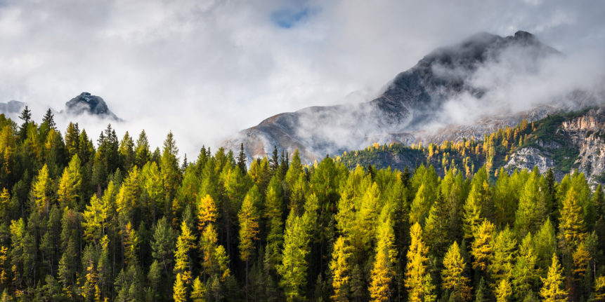 An autumnal mountain landscape, featuring larch trees with fall colours andrising fog with the Swiss Alps in the background. Golden Days - Copyright Johan Peijnenburg - NiO Photography