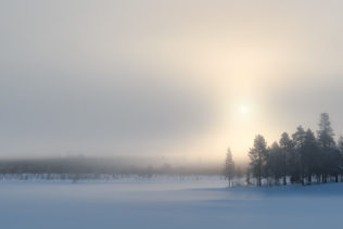 A misty Arctic winter landscape showing a Swedish boreal forest in Lapland, with snow, mist, and the warm glow of the setting sun. Arctic Mist - Copyright Johan Peijnenburg - NiO Photography