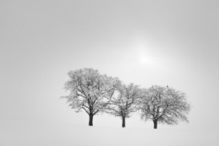 A misty winter landscape in B&W, featuring three snow-dusted trees and a bird being lit by the sun peeking through the fog. On Watch - Copyright Johan Peijnenburg - NiO Photography