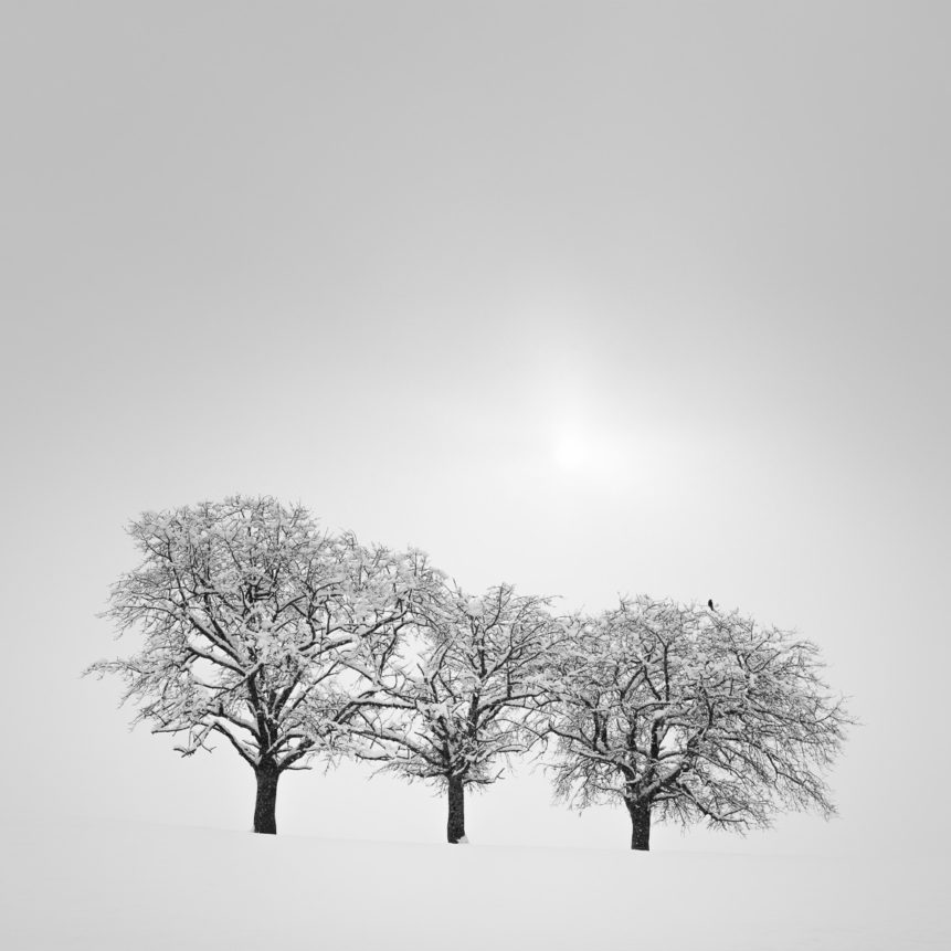 A countryside landscape in B&W, showing three trees in a winter landscape with snow and a bird waiting for the sun to break through the fog. White Out - Copyright Johan Peijnenburg - NiO Photography