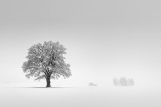 A foggy winter landscape in B&W, featuring an old oak tree, a farmhouse and a group of trees in the Swiss countryside near Gruyères. The Oak - Copyright Johan Peijnenburg - NiO Photography
