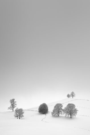 A snow landscape in B&W with trees in winter. The trees seem to gather on a hill near Fribourg in the Swiss countryside. The Gathering - Copyright Johan Peijnenburg - NiO Photography