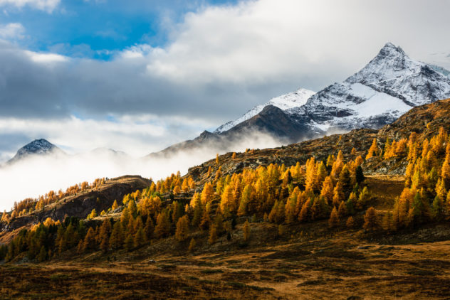 Autumn in the Alps of Engadin in Switzerland, showing mountains with fog and snow and larch trees with fall colours lit sideways by early morning light. Indian Summer - Copyright Johan Peijnenburg - NiO Photography