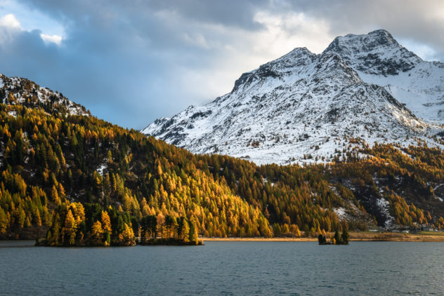 A lake landscape showing the beauty of autumn in the Swiss Alps at Lake Sils in Engadin with its beautiful larch tree forests and mountains. The mountain in the back is Piz de La Margna. Colours of Fall - Copyright Johan Peijnenburg - NiO Photography