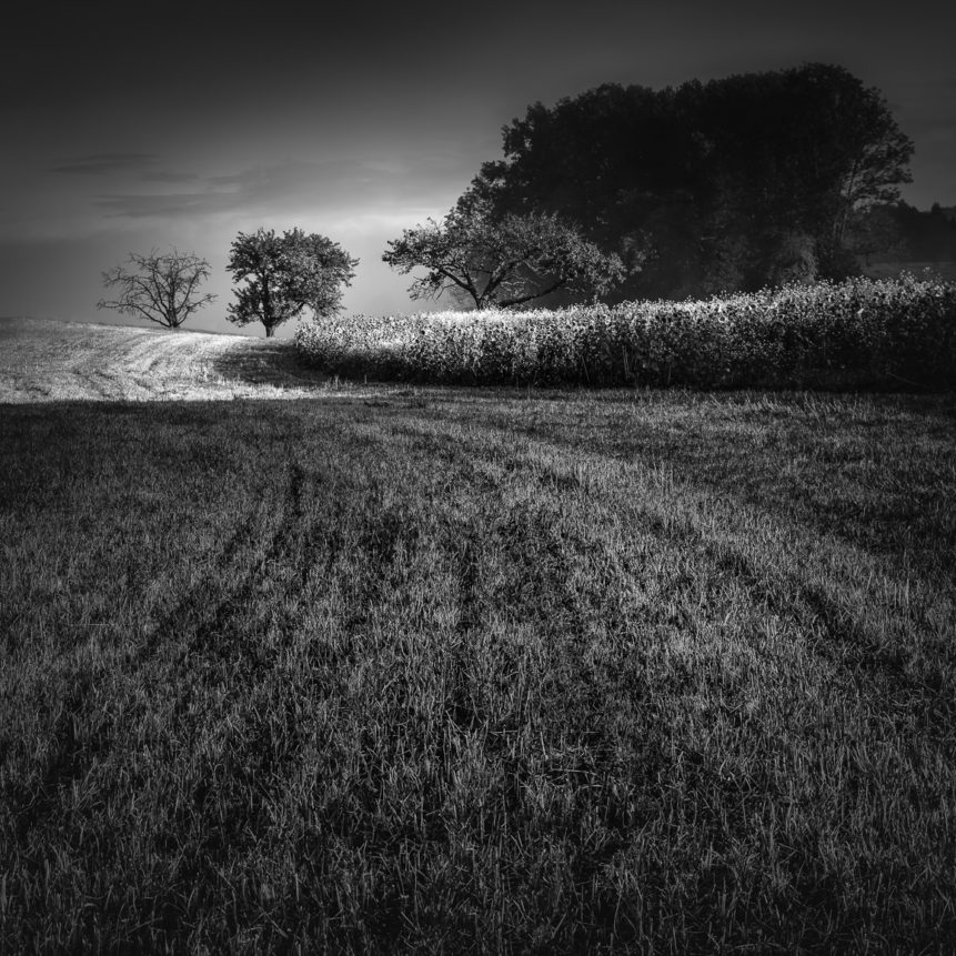 A swiss countryside landscape at sunrise in black & white, with tracks in a freshly mowed field leading the eye towards the trees on the horizon. Into the Light - Copyright Johan Peijnenburg - NiO Photography
