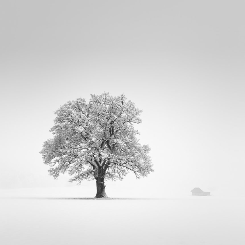 A minimalist snow landscape in B&W, showing a misty countryside landscape in winter with an oak tree and a farmhouse near Gruyères in Switzerland. An Oak with Snow - Copyright Johan Peijnenburg - NiO Photography