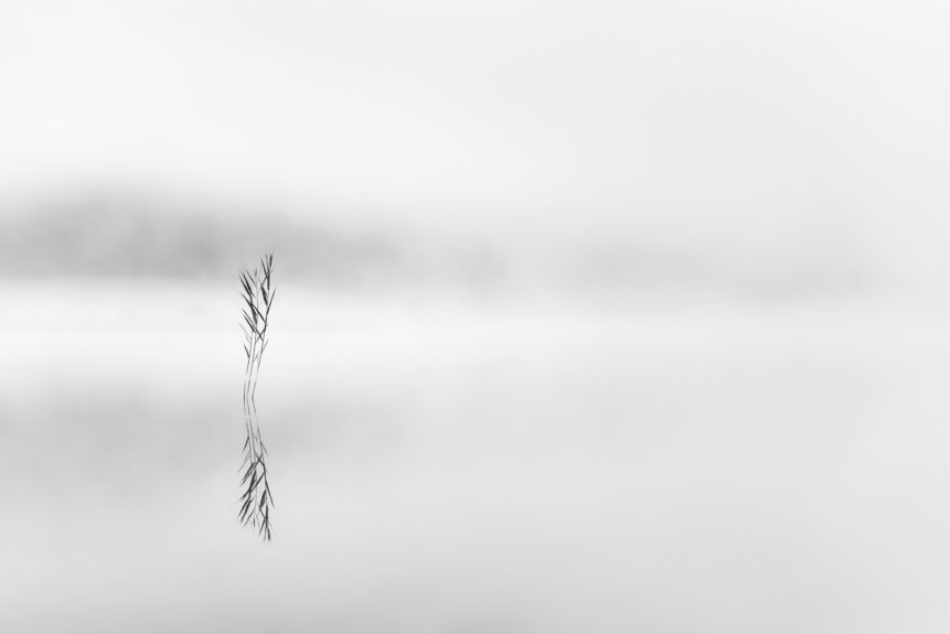 A minimalist lake landscape in black & white with reed and fog reflected in Lej da Staz (Stazersee), a small mountain lake close to St. Moritz in the Swiss Alps. Zen - Copyright Johan Peijnenburg - NiO Photography