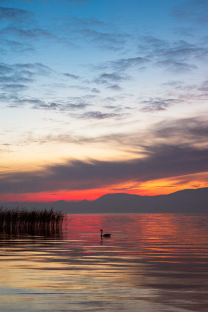 A colourful lakeside sunset at Lac de Neuchâtel in Switzerland, with a swan, reed and the silhouetted mountains of the Swiss Jura in the back of the lake. Stillness in Colour - Copyright Johan Peijnenburg - NiO Photography