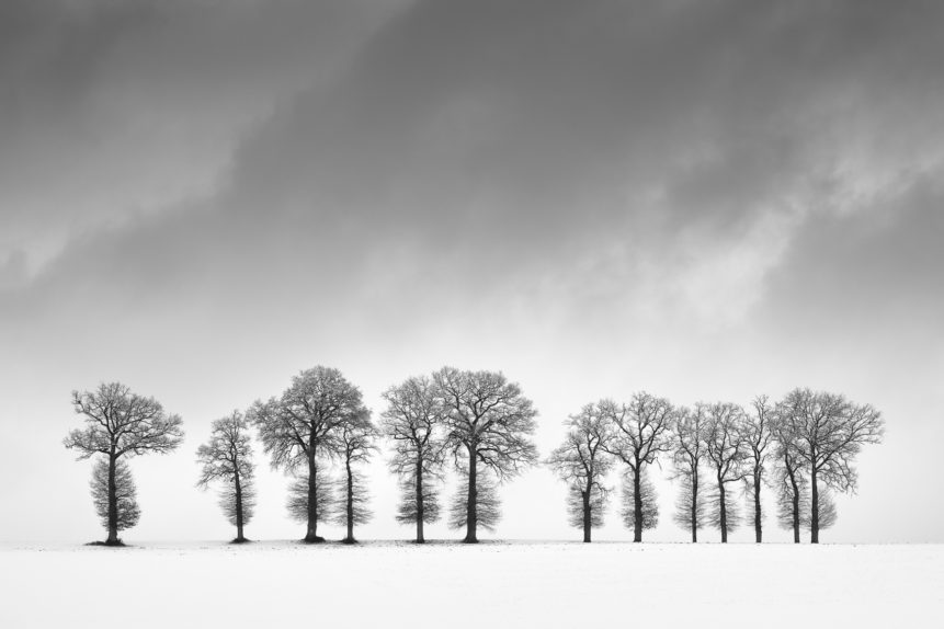A winter landscape in black & white, featuring a line of trees against a moody sky in a countryside landscape with snow. The Guardians - Copyright Johan Peijnenburg - NiO Photography