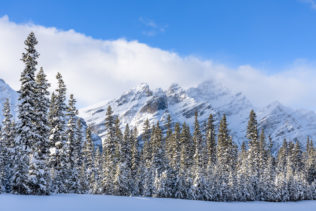 A Canadian winter landscape near Bow Summit in Banff National Park, showing trees with a fresh touch of snow and soft light warming the Rocky Mountains. Pristine - Copyright Johan Peijnenburg - NiO Photography