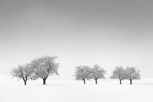 A minimalist countryside winter landscape with six fruit trees against a background of fog and snow. Family Ties - Copyright Johan Peijnenburg - NiO Photography