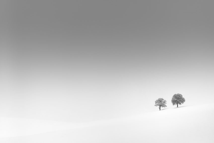 A serene and snowy winter landscape in B&W, featuring two solitary trees dusted with fresh snow against a misty background. Together Alone - Copyright Johan Peijnenburg - NiO Photography
